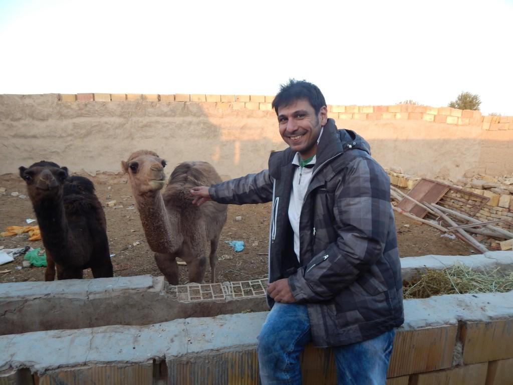 141128 Fahraj Camel (5) (2304 x 1728)